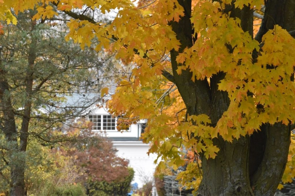 Fall Leaves Tour in Nova Scotia