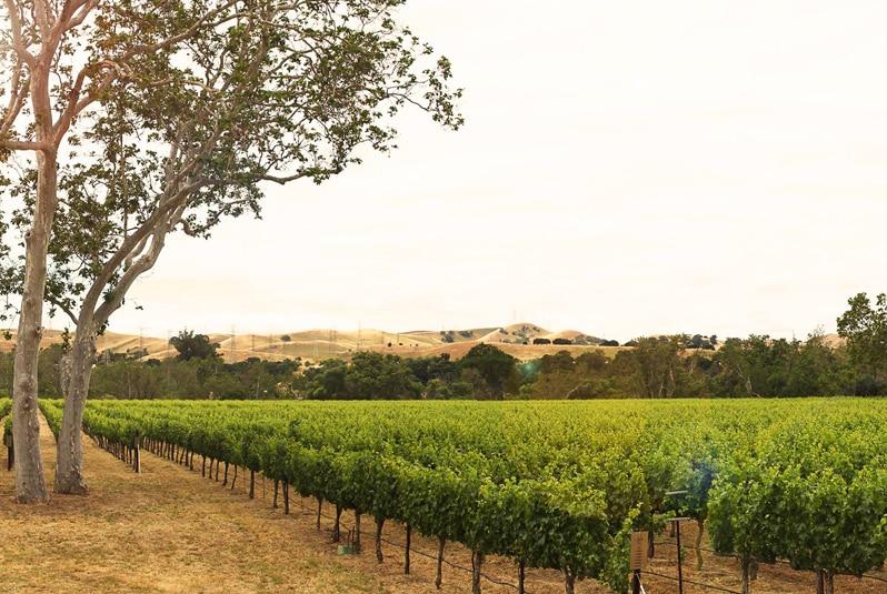 Best Wineries in Livermore CA