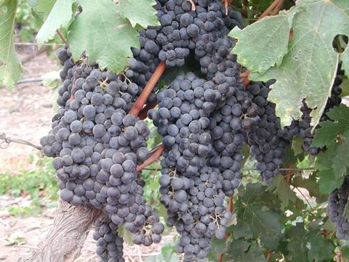 Baja_wine2