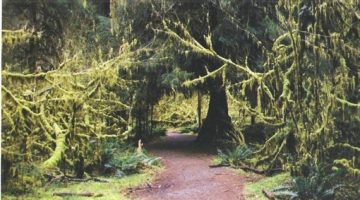 Seattle Olympic Rainforest