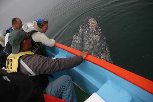 San Ignacio's Whale Lagoon