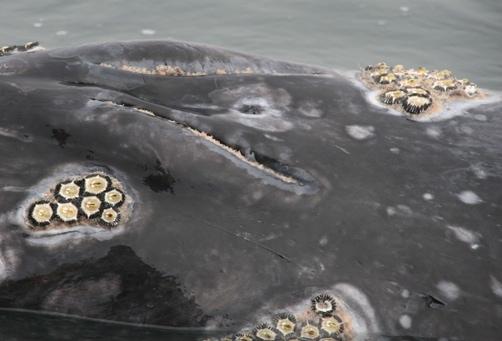 San Ignacio's Whale Lagoon in Baja California