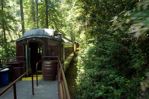 fort-bragg-skunk-train-forest