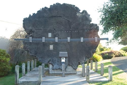 fort-bragg-tree