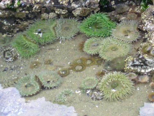 sea life at low tide