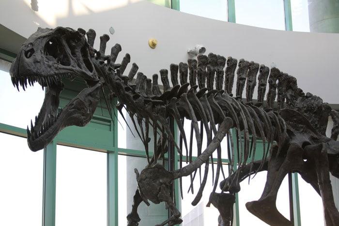 North Carolina Museum of Natural History and Science