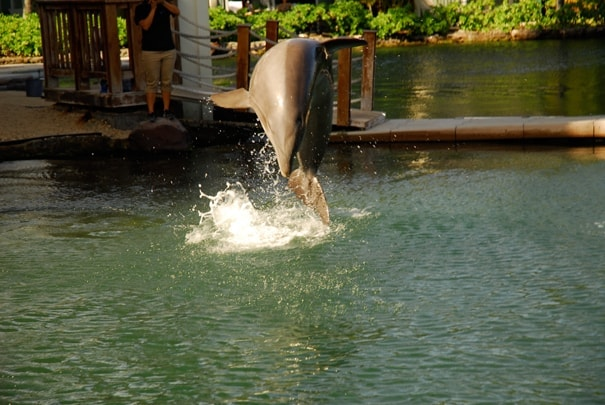 Swimming with Dolphins at the Kahala