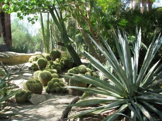 Palm_Springs_Moortens_Botanical_Gardens