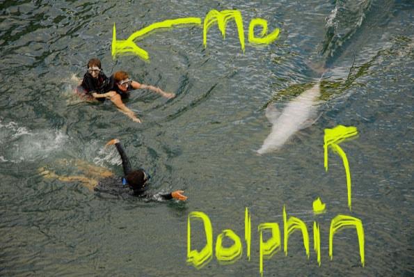 kahala-dolphin-questt