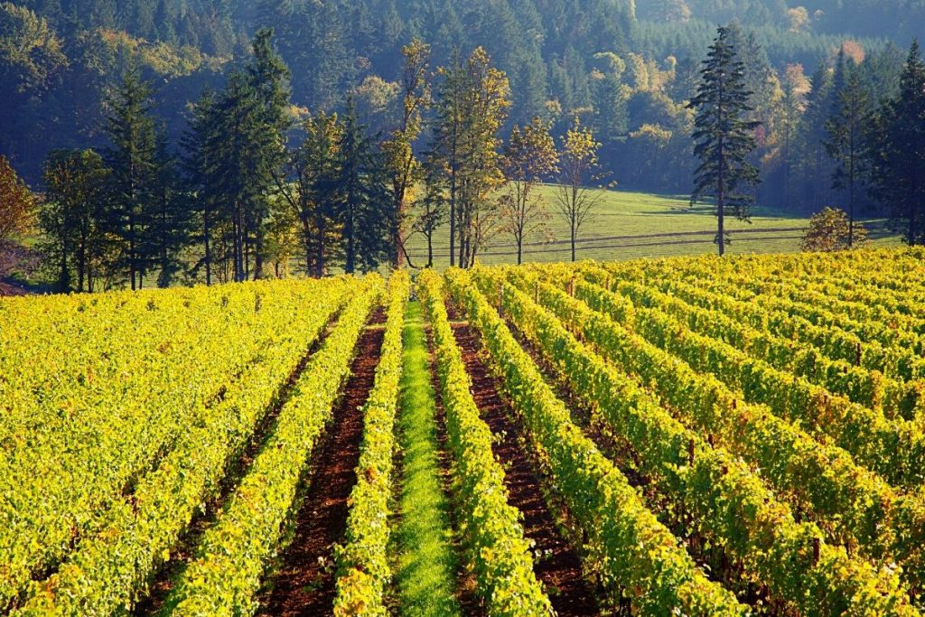 theWillamette Valley is home to more than 700 wineries