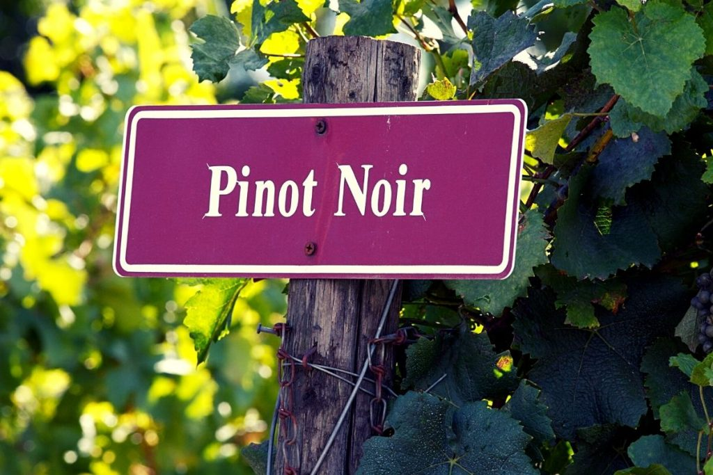 Pinot Noir – this flagship wine of Willamette Valley vineyards