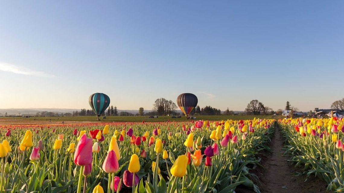hot air balloon in Woodurn, Oregon in Willamette Valley