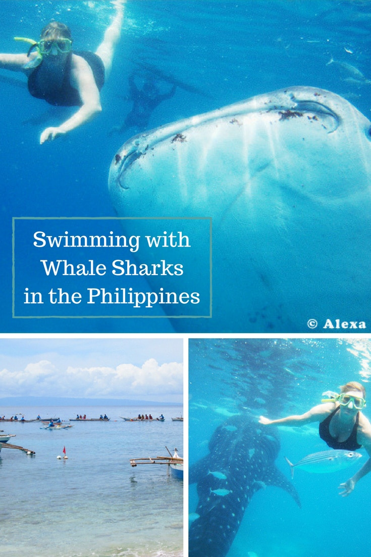 Swimming with Whale Sharks & learning to basket weave in the Cebu, a province and island located in the Visayan islands of the Philippines. #whalesharks #oslobcebu #philippines