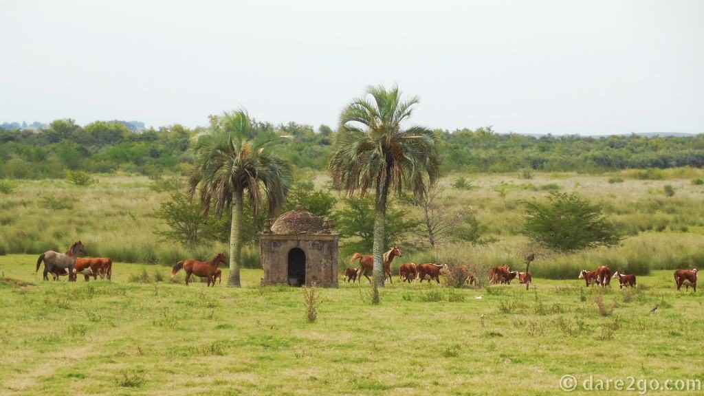 Uruguay – countryside with cows and horses