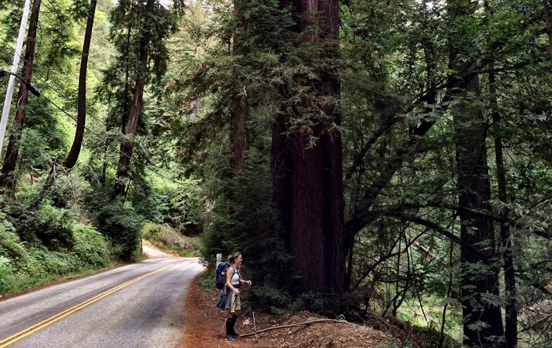 Walking through the red woods. Courtesy of: Marie Horn