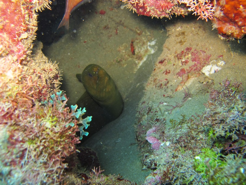 eel and reef during Power Snorkeling in the Dominican Republic