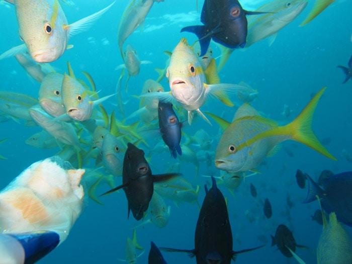 shot of fish underwater in susoa, dominican republic