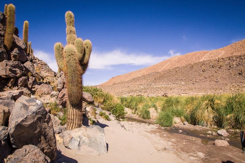 Atacama Cactus Hike in Chile