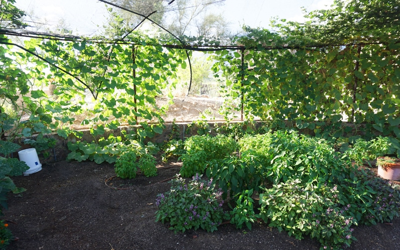Dr. Andrew Weil, M.D garden at hacienda del sol in tucson, arizona