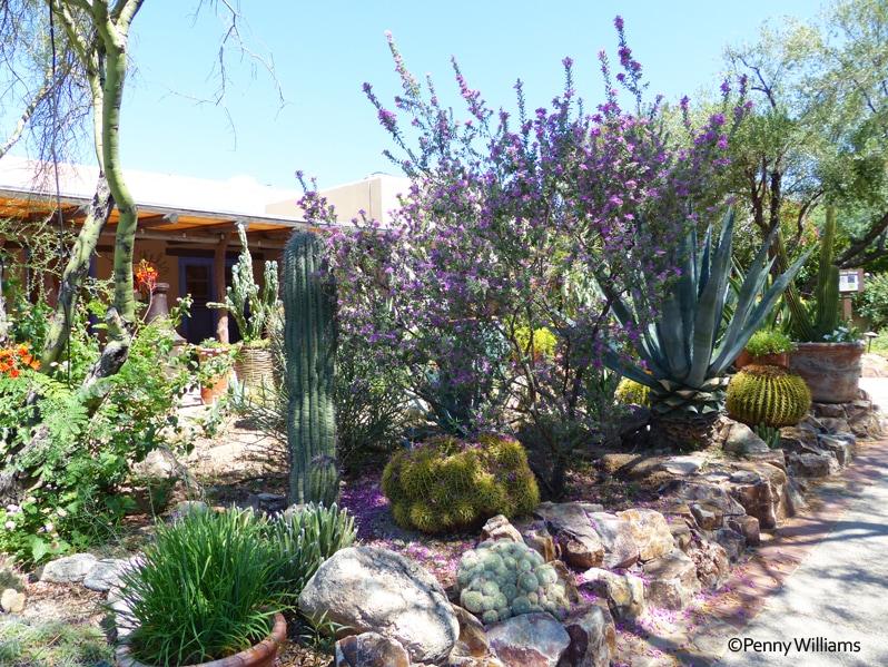 Hacienda del Sol Resort in Tucson, Arizona cactus garden