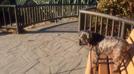 Dog Friendly Whidbey Island