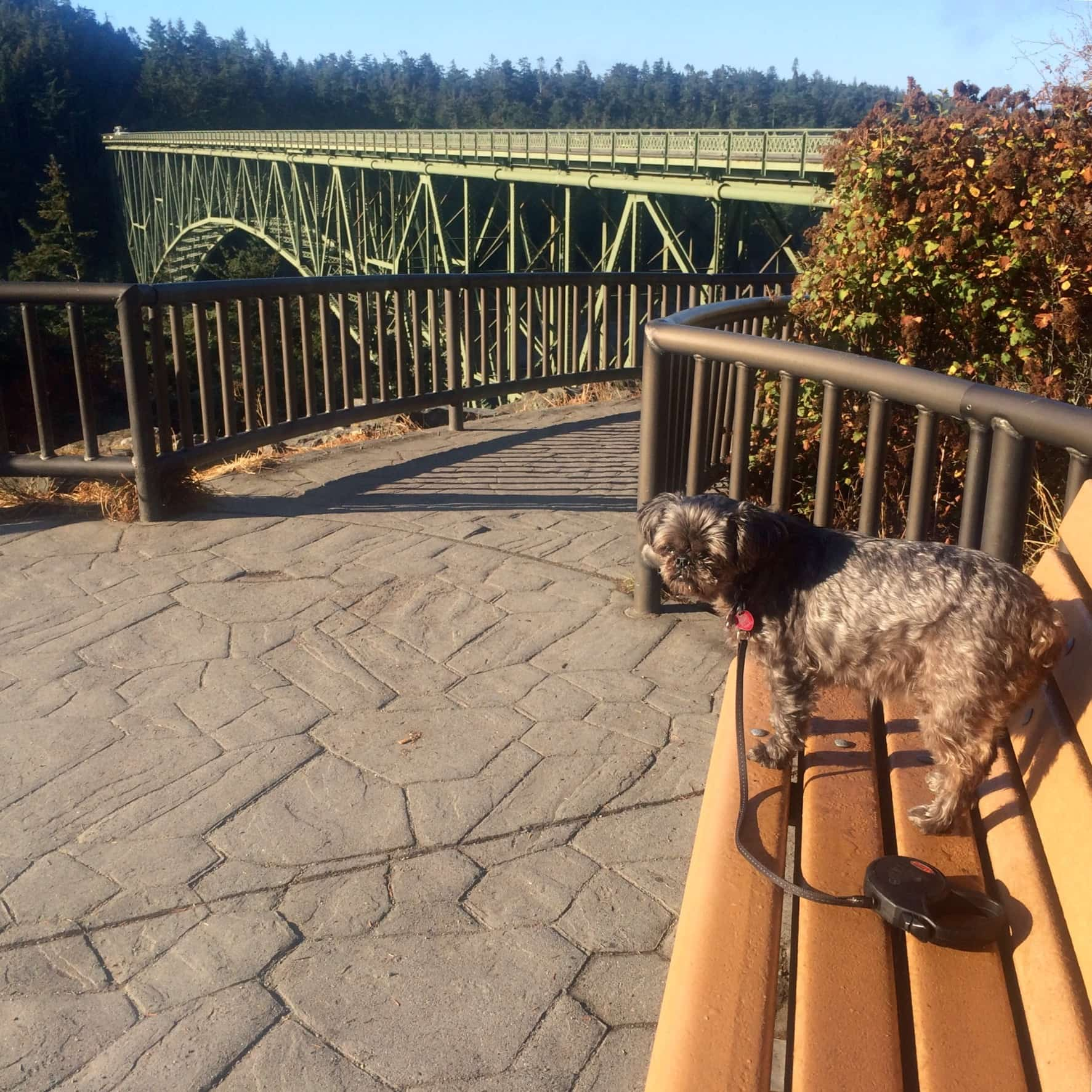 bd1d7dcfcb5e Exploring Dog Friendly Whidbey Island - 52 Perfect Days