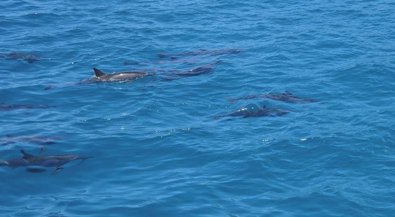 The Dolphin Star offers Oahu's Eco-Friendly Cruise for Dolphin Lovers
