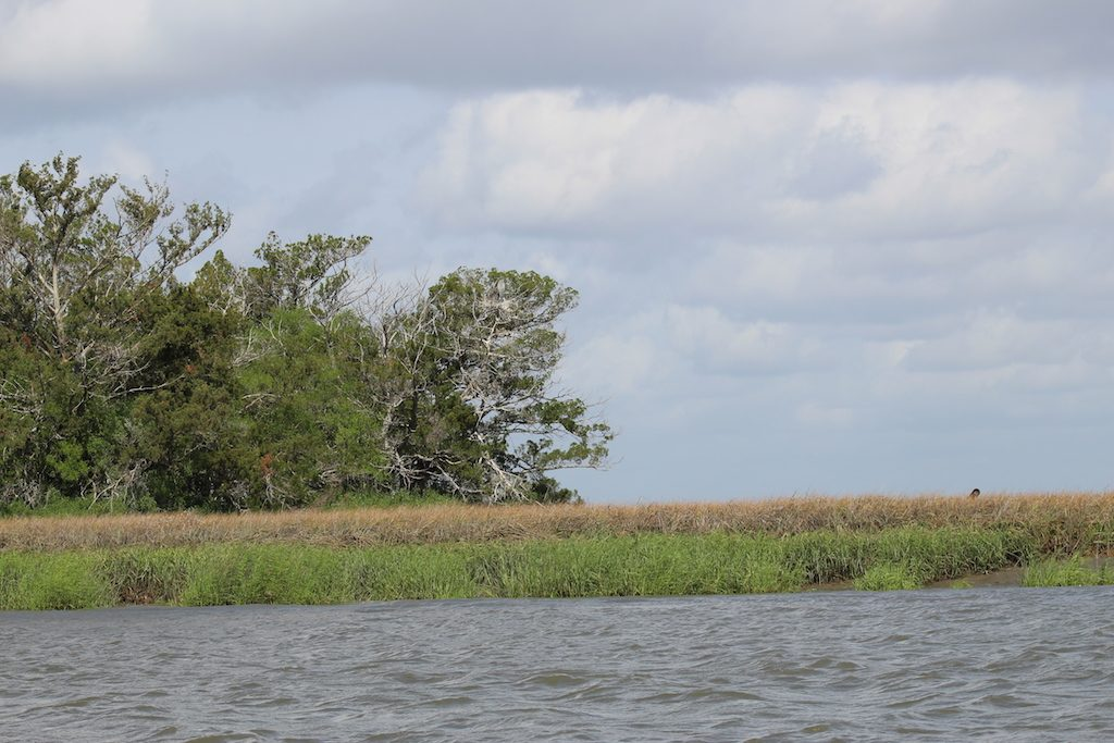 The natural side of St. Simons Island, Georgia: Discover the saltmarsh of St. Simons Island with a kayak tour from Ocean Motion or boat tour with Cap Fendig