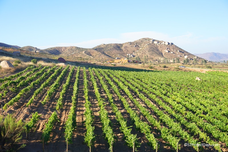 Valle de Guadalupe wine region