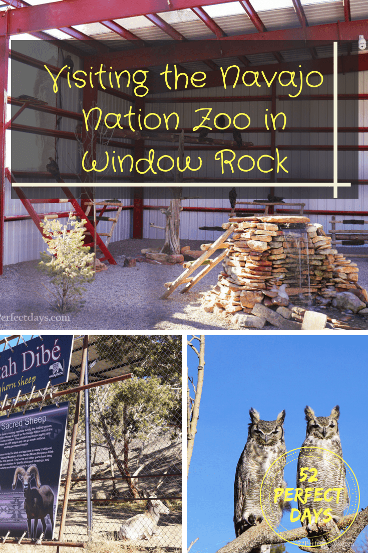 Visiting the Navajo Nation Zoo in Window Rock, Arizona. This is a rescue zoo run by the Navajo tribe. #navajo #travel #zoo