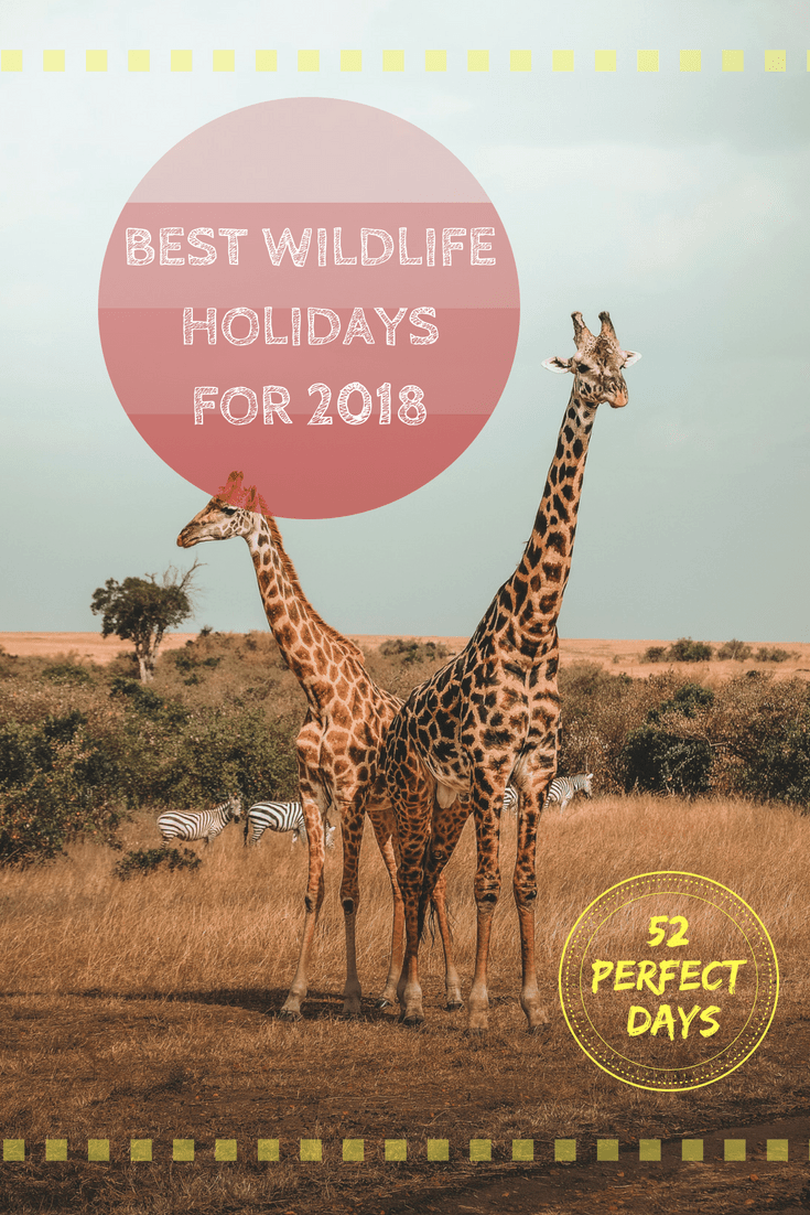 Best wildlife holidays for 2018 #safari #travel
