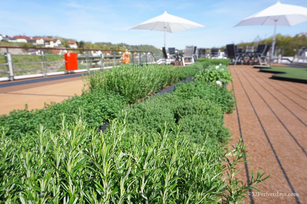 Herb Garden on Sun Deck on Viking Ship
