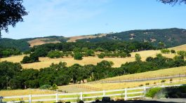 day in paso robles