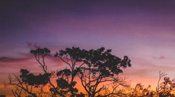 Serengeti at sunset