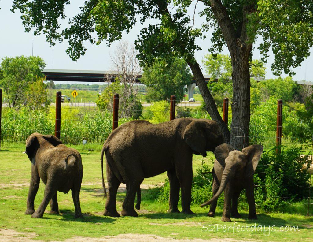 Elephants at Wichita, Kansas Zoo