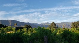 topa winery in ojai, ca