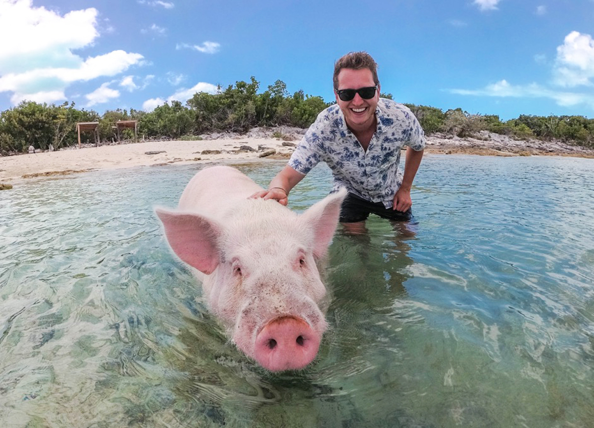 Swimming with Pigs on Long Island