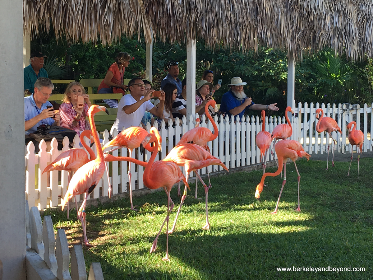 Mingling with Marching Flamingos