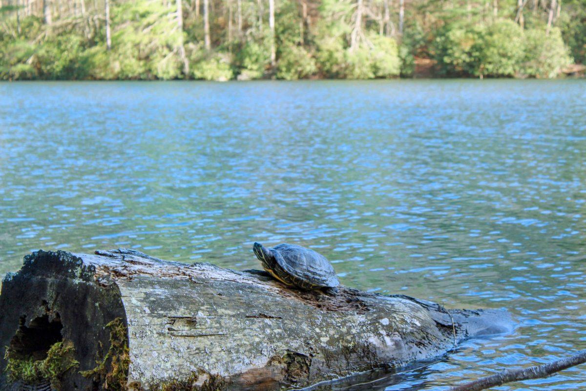 Lake Trahlyta Vogel State Park georgia