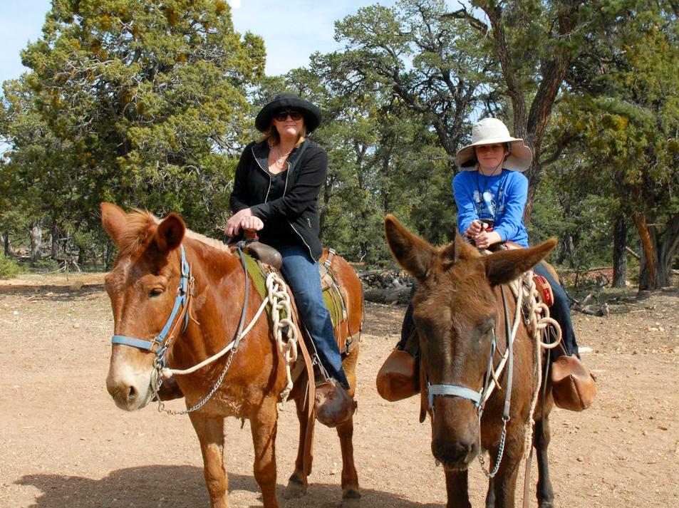 mule ride at grand canyon