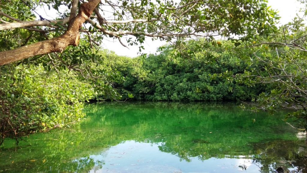 Casa Cenote in Yucatan