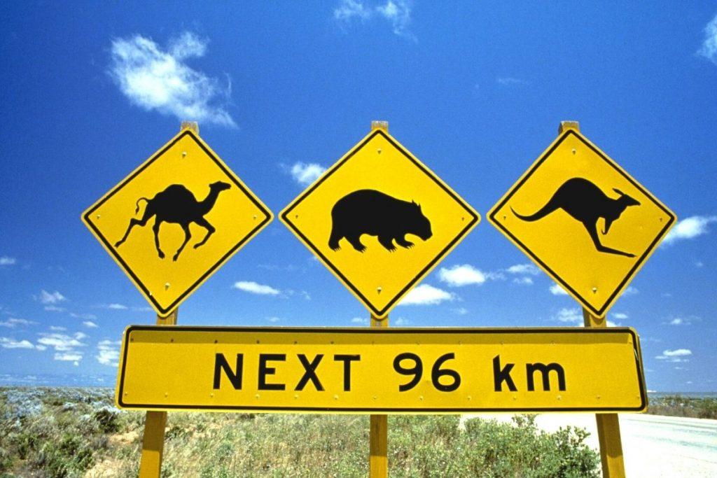 watch for kangaroo road sign