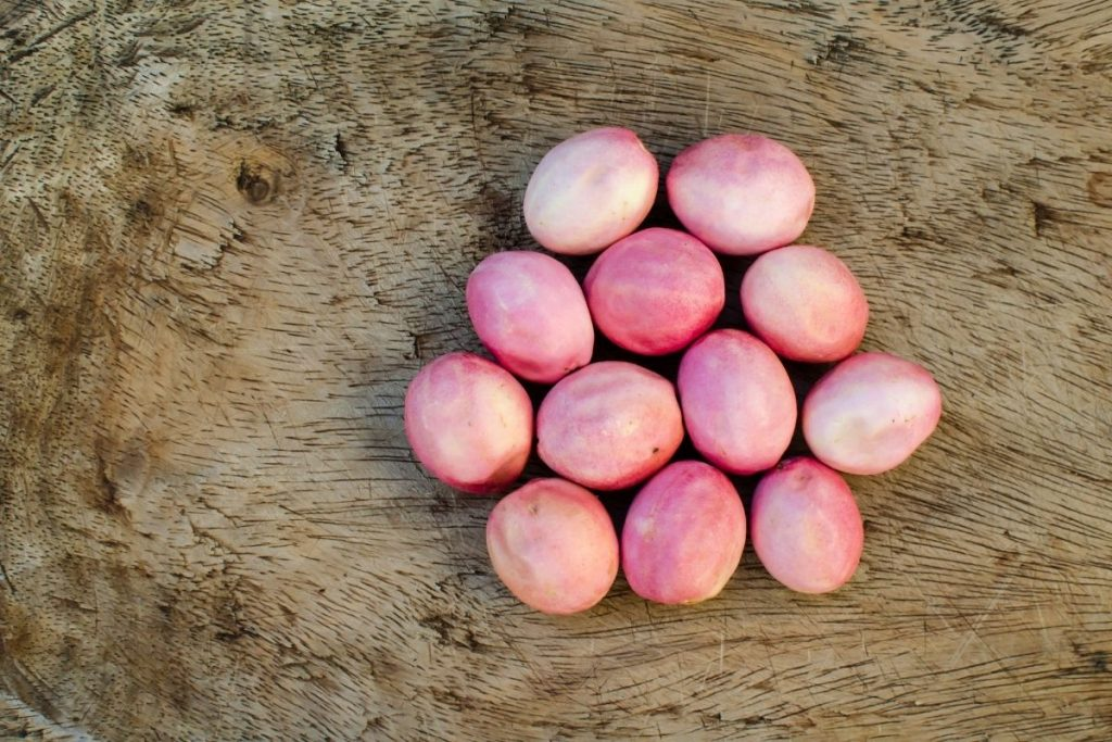 Icaco is also known as Coconut plum
